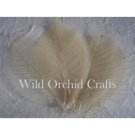 Wild Orchid Crafts - 100 NATURAL SKELETON LEAVES