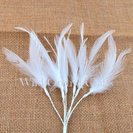 Wild Orchid Crafts - 6 FEATHERS FEATHERS